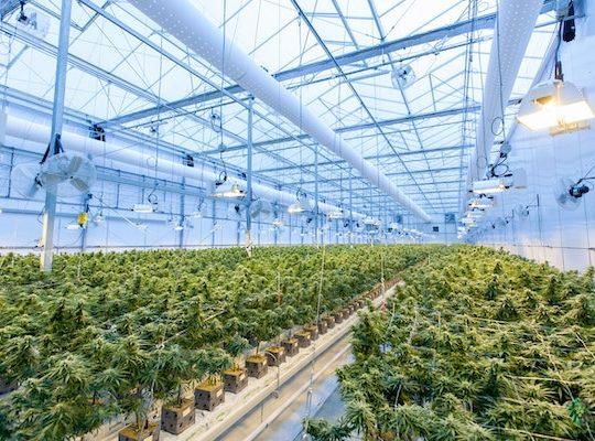 Marijuana Legalization in NYC | Metro Manhattan Office Space