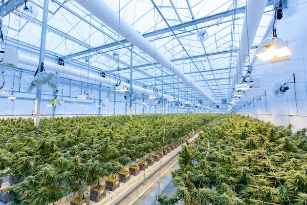 Marijuana Legalization Could Alleviate NYC's Commercial Real Estate Crisis